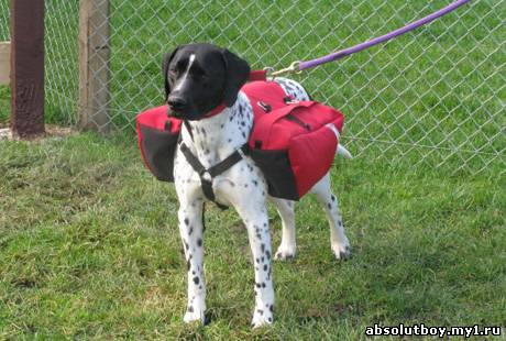 Рюкзак собаке своими руками